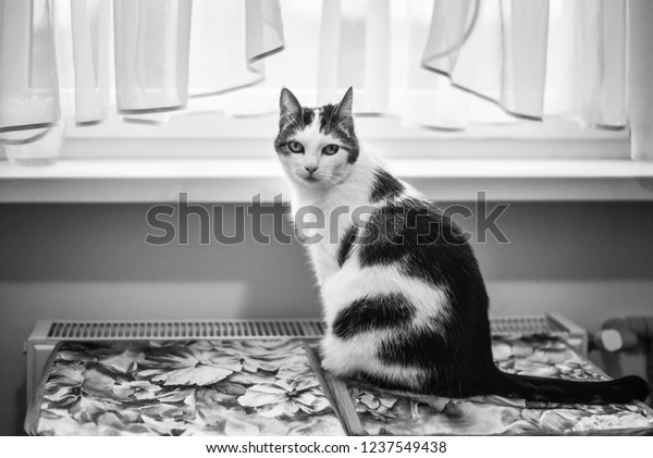 black-white-photo-kitten-contrast-600w-1
