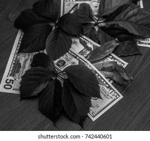 Black and white photo of money (dollars) in the autumn motive