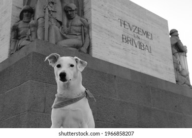 Black and white photo of a white mongrel sitting against the background of the Freedom Monument in Riga, the inscription on the monument - Fatherland and Freedom