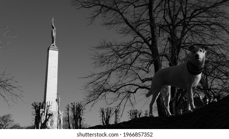 Black and white photo of a white mongrel standing in front of the Freedom Monument in Riga