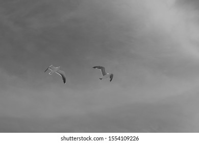 black and white photo of multiple seagulls flying.