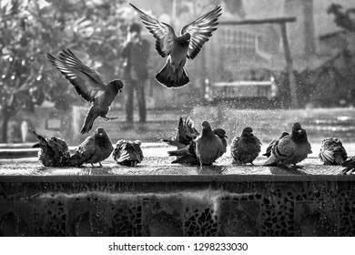 Black and white photo of pigeons in park