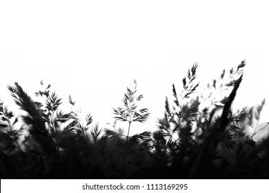 Black and white photo of a plant. Seems like a fern.