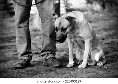 Black and white photo of a sad dog with owner