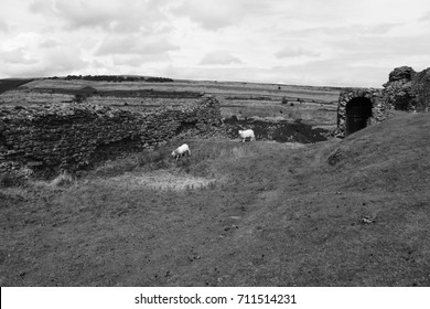 Black and White Photo, Sheep in the Ruins, England.