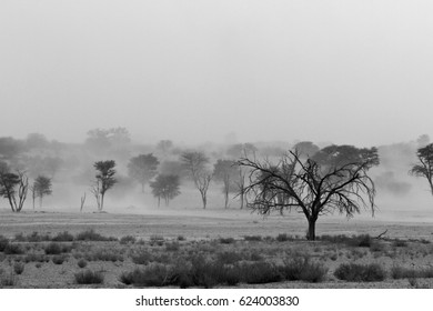 Black and white photograph of dead trees among a sand storm