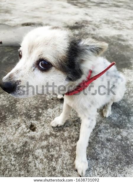 black-white-photograph-dog-gray-600w-163