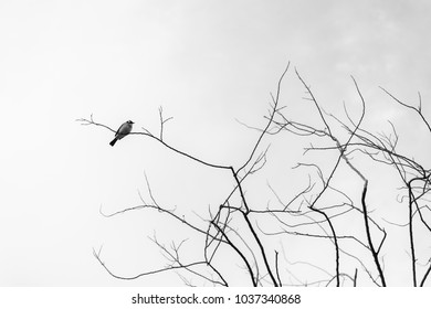 black and white picture branches of tree on spring