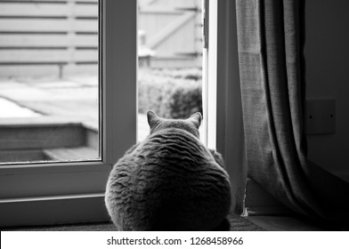 Black and white picture of a British Short hair Cat sitting in front of an open patio door leading to a garden in a house in Edinburgh City, Scotland, UK