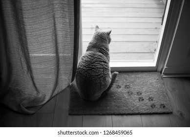 Black and white picture of a British Shorthair Cat sitting on a floor mat with paw prints in front of an open patio door with a curtain in a house in Edinburgh City, Scotland, UK