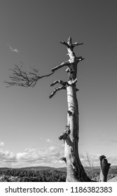 Black and white picture of a dead tree in Larvik, Norway