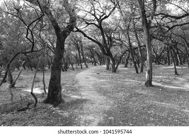 Black and white picture of a deserted path in a barren forest