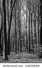 Black and white picture of a forrest during fall