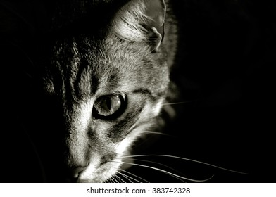 Black and white picture of grey tabby cat head, playing, horizontal.