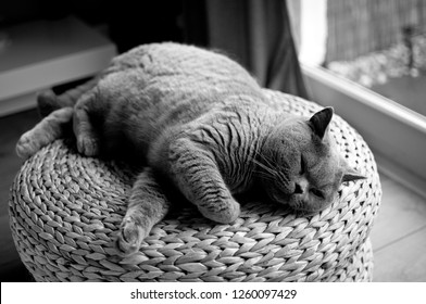 Black and white picture of a Lazy British Short Hair cat sleeping on a wicker stool next to a patio door in a house in Edinburgh City, Scotland, UK