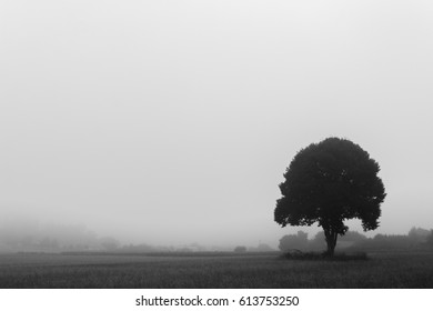 Black and white picture of a lonely tree in a wheat field along the Camino de santiago in Spain