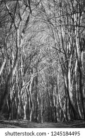 Black and white picture of a path going through a forrest