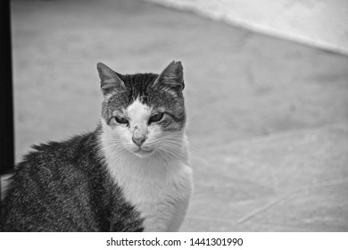 Black & white picture of stray tabby cat