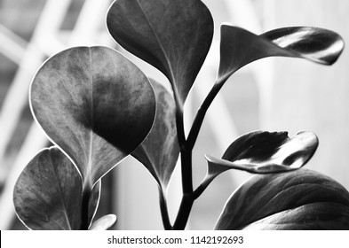 Artistic Photography Images Stock Photos Vectors Shutterstock