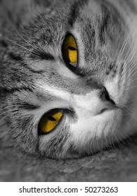 Black and white portrait of a cat with orange eyes.