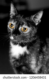 black and white portrait of a dark cat with yellow eyes