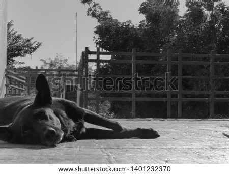 black-white-portrait-female-dog-450w-140