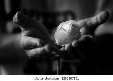 Black and White portrait of hands holding a white rose