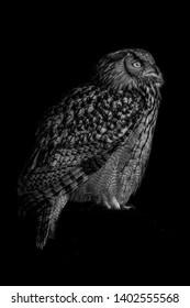 Black and white portrait photo of owl in Wildpark Gangelt, Deutschland