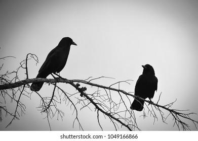 Peaceful Birds Images Stock Photos Vectors Shutterstock