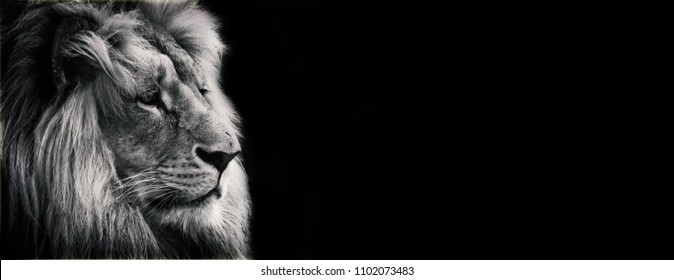 Black and white proposal lion with black background