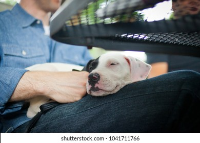 Black and white puppy sleeps in mans lap while outside at restau