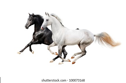 black and white pureblood horses