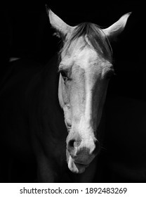 Black and white quarter horse