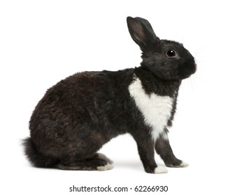 Black and white Rabbit in front of white background