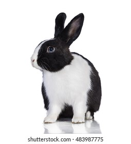 Black and white rabbit isolated on white