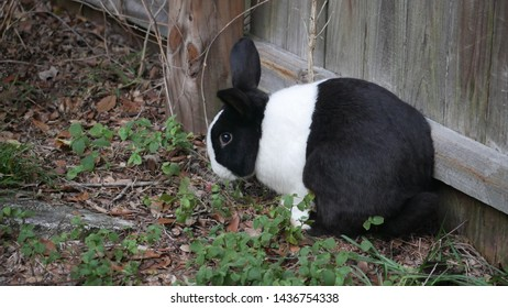 Black and white rabbit near brown wood fence