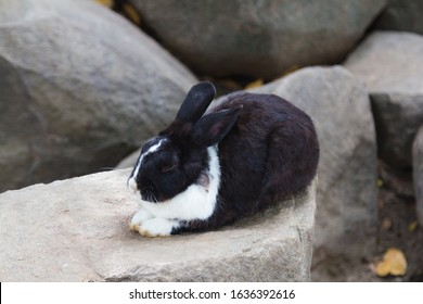 Black and white rabbit on the rock
