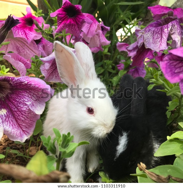 Black and white rabbits between the flowers