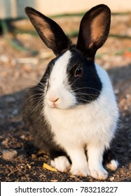 Black And White Rabit sat on ground