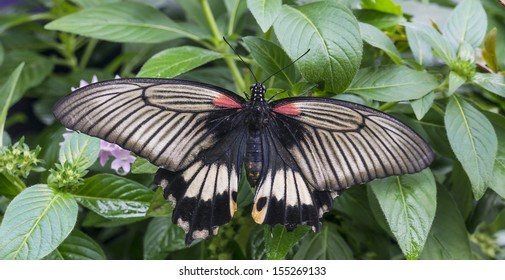 Black, white and red butterfly against green leaves