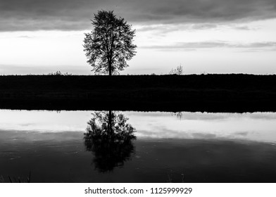 Black and white reflection of a tree in the river