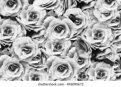 black and white rose abstract  background