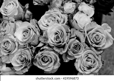 Black and white rose images stock photos vectors shutterstock black and white roses background mightylinksfo