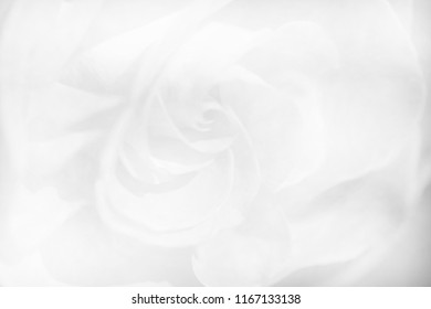 black and white roses flowers soft tone for background