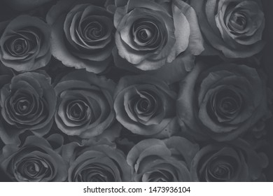 Black and white roses in vintage style.