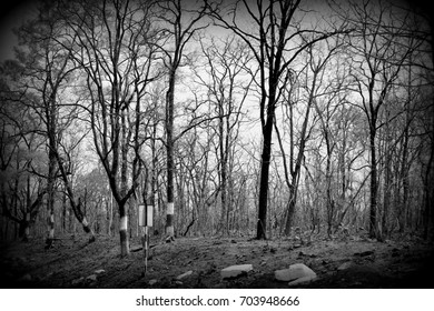 Black and white scary beautiful trees in the Indian jungle