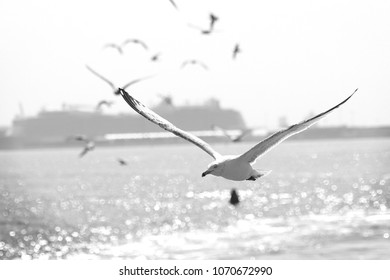 Black and White Seagulls on River