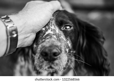 Black and white, shallow focus image of a dog owner's hand seen stroking his Spaniel dog after a success agility class. The dog is looking directly at the owner.