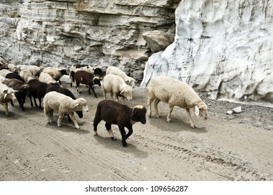 black and white sheeps on road