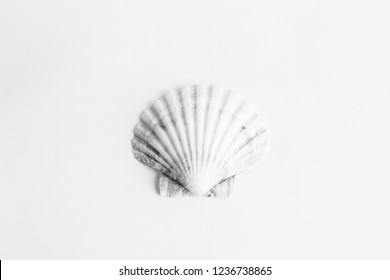 black and white shell photography.